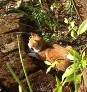 Garden Ginger