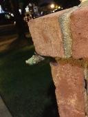 a cicada emerging... this was creepy!