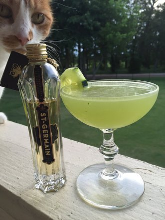 photo bombed cocktail kitty